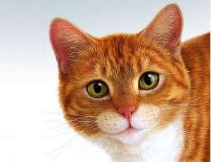 对猫咪有害药品的种类及注意事项