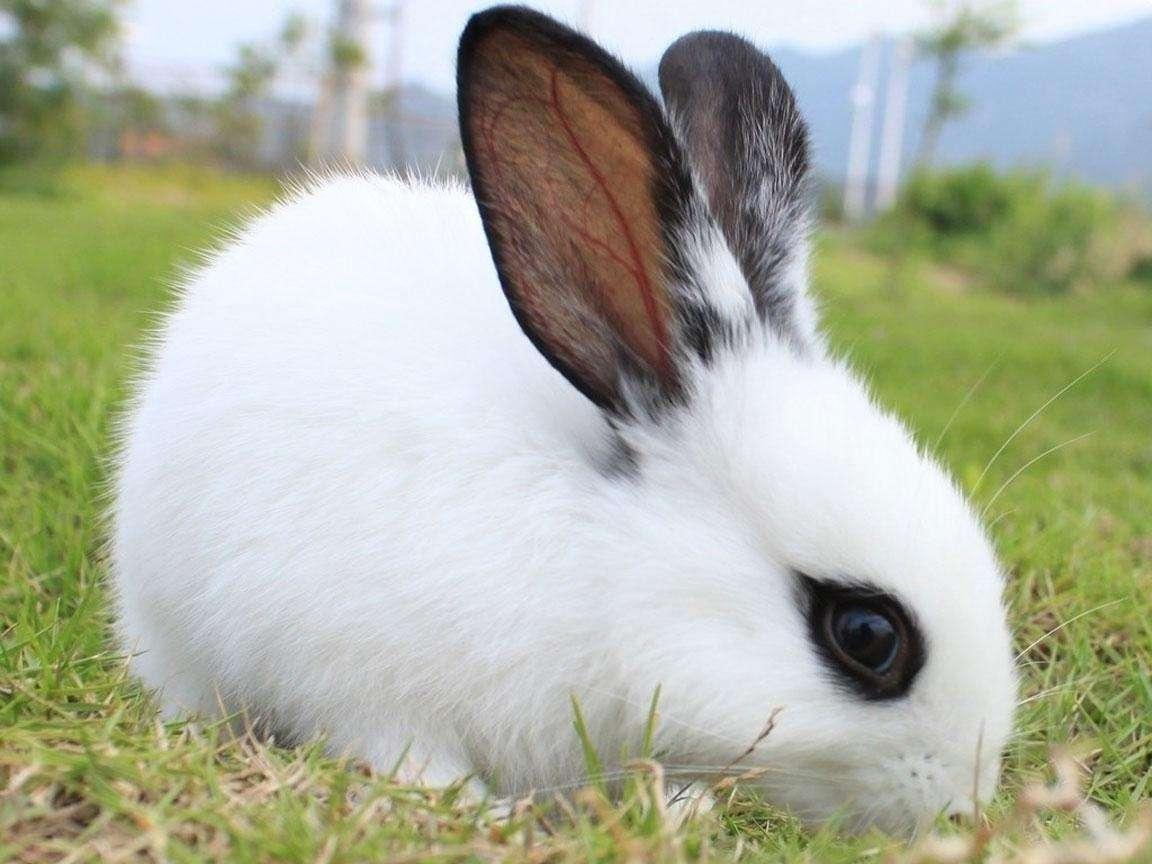 兔兔在冬天脱毛是怎么了?